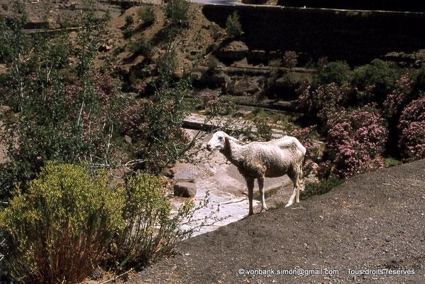 [041-1978-12] Massif de l'Aurès