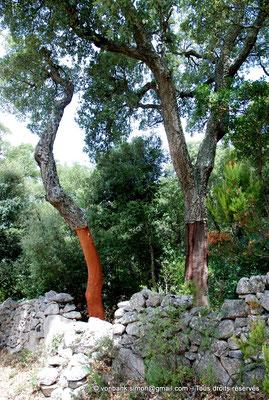 [NU904-2015-077] Nuraghe Majori (Sardaigne) : Forêt de chênes-lièges