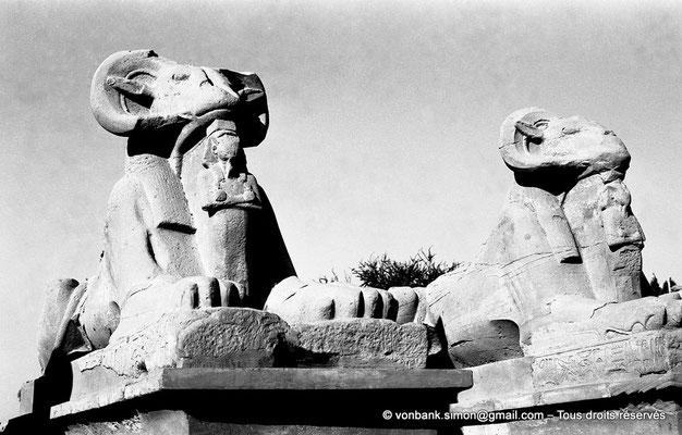 [NB077-1973-18] Karnak - Parvis du Temple : Sphinx à tête de bélier (criocéphale) tenant entre leurs pattes une statue du pharaon