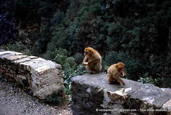 [012-1984-07] Gorges de Kherrata - Magots