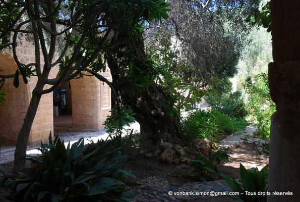 [NU900-2012-0165] Agia Napa : Végétation luxuriante située à l'intérieur de l'enceinte du monastère - en arrière-plan, l'une des entrées