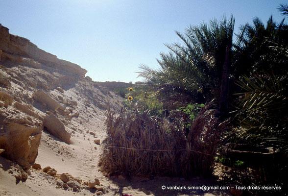 [044-1978-31] El Oued