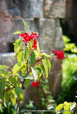 [NU900-2012-0156] Agia Napa : Végétation luxuriante située à l'intérieur de l'enceinte du monastère
