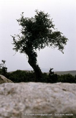 [020-1978-22] Roknia : Olivier et dolmen