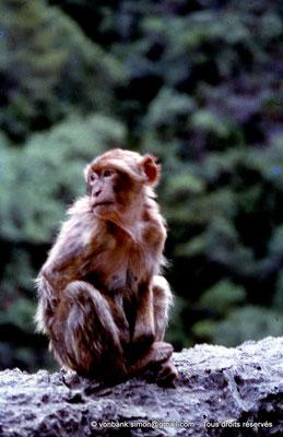 [071-1978-29] Gorges de Kherrata - Magot