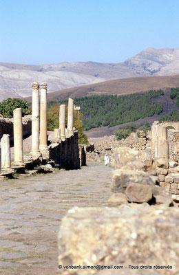 [001-1983-23] Djemila (Cuicul) : Devant les grands thermes, colonnade de la grande rue prolongée en dehors de la ville primitive