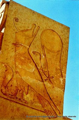 [080-1973-11] Deir el-Bahari : Temple d'Hatchepsout - Partie supérieure d'un pilier hathorique : Horus (chapelle d'Hathor)