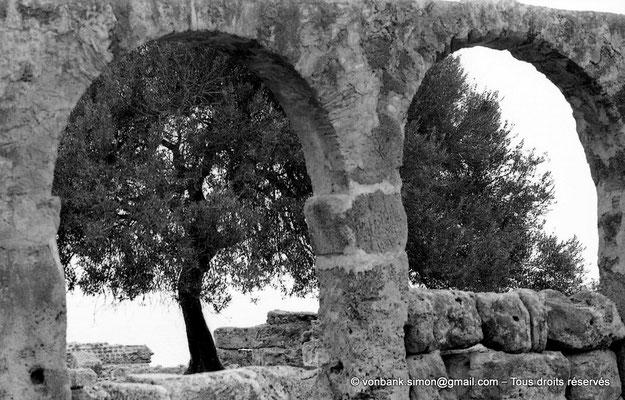 [NB039-1978-16] Tipasa de Maurétanie : Grande basilique