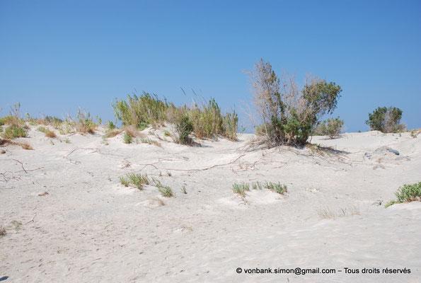 [NU900x-2013-0097] GR - Crète - Elafonissi : Genévriers endémiques