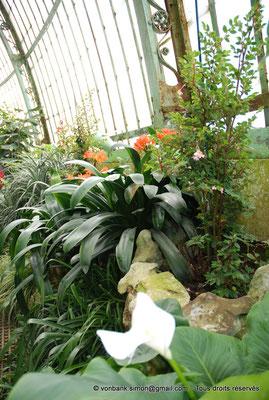 [NU900c-2012-0055] B - Bruxelles - Laeken : Serres royales - Jardin d'hiver