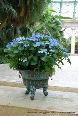 [NU900c-2012-0229] B - Bruxelles - Laeken : Serres royales - Jardin d'hiver