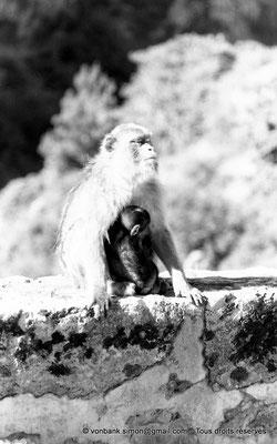 [NB055-1978-20] Gorges de Kherrata - Magots