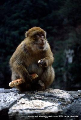 [012-1984-05] Gorges de Kherrata - Magot