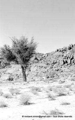 [NB102-1980-04] DZ - Tamanrasset - Hoggar