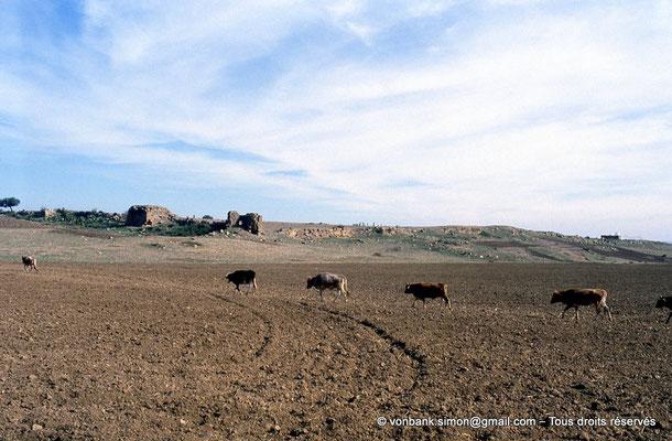 [006-1983-08] Sidi Slama (Henchir Bordj Hellal) : Forteresse byzantine - Tours et rempart