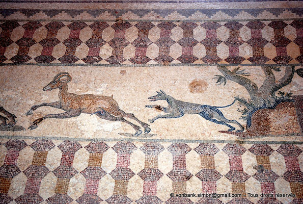 [NU900-2012-066] Paphos (Nea Paphos) : Villa de Dionysos - Scène de chasse - Chien poursuivant un mouflon [11]