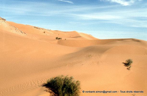 [037-1980-09] Désert - Dunes du grand erg oriental