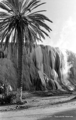 [NB025-1978-51] Hammam Meskoutine (Aquae Thibilitanae) : Cascade pétrifiée