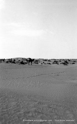 [NB014-1981-02] Djamaa - Dromadaire