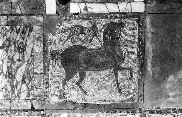 [NB011-1981-07] Carthage (Carthago) : Mosaïque des chevaux - Cheval et louve sous laquelle se trouvent deux enfants, peut-être les jumeaux Romulus et Rémus