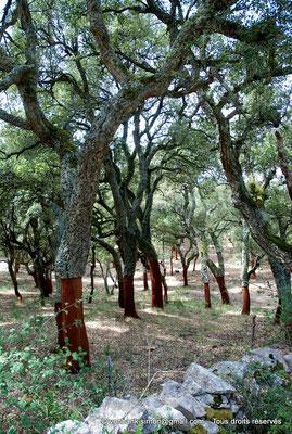 [NU904-2015-079] Nuraghe Majori (Sardaigne) : Forêt de chênes-lièges