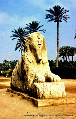 [084-1973-01] Memphis : Sphinx monumental situé sur le site du complexe religieux de Ptah