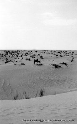 [NB014-1981-01] Djamaa - Dromadaire
