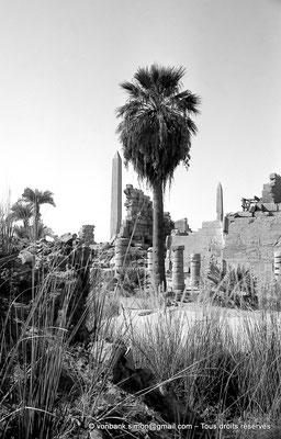 [NB075-1973-34] Karnak - Trésor de Chabaka : Colonnade perpendiculaire au mur Nord de la salle hypostyle - En arrière-plan, obélisques d'Hatchepsout et de Thoutmosis Ier