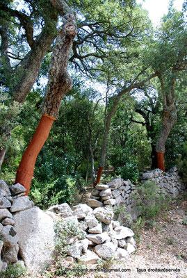 [NU904-2015-076] Nuraghe Majori (Sardaigne) : Forêt de chênes-lièges