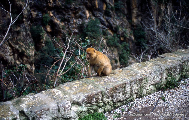 [012-1984-10] Gorges de Kherrata - Magot
