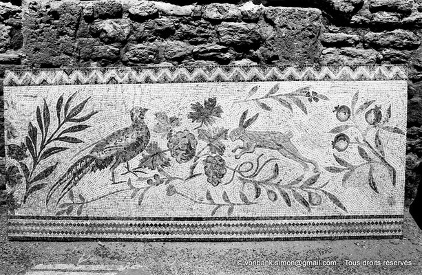 [NB011-1981-08] Carthage (Carthago) : Antiquarium - Mosaïque