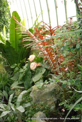 [NU900c-2012-0045] B - Bruxelles - Laeken : Serres royales - Jardin d'hiver