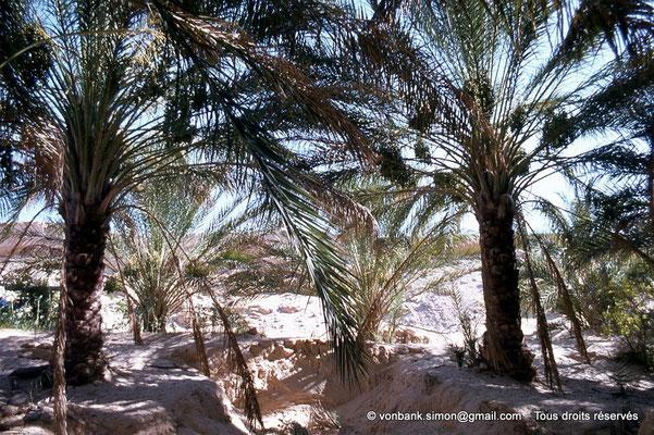 [044-1978-28] El Oued