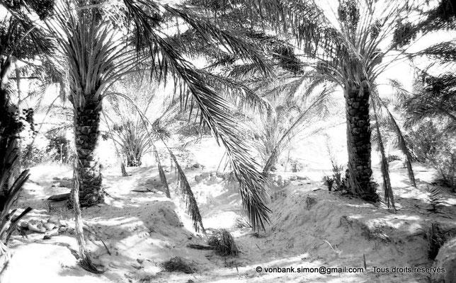 [NB091-1978-25] El Oued