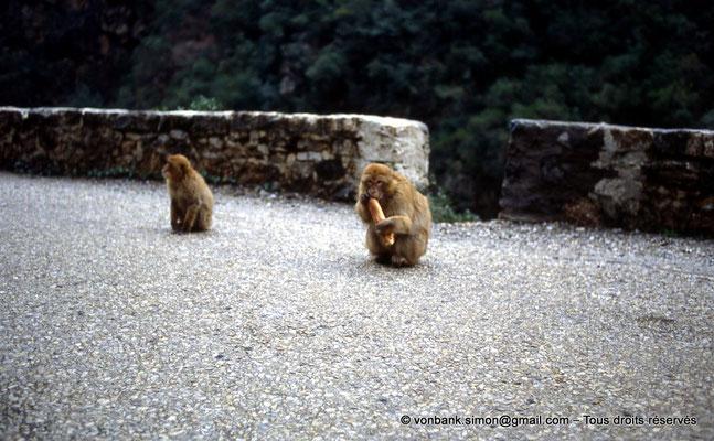 [014-1984-35] Gorges de Kherrata - Magots