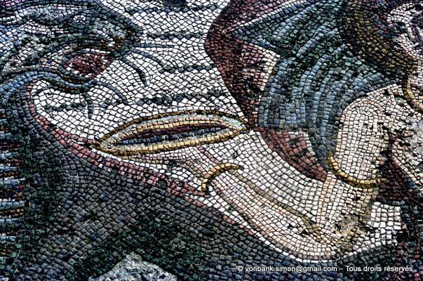 [072-1978-06] Annaba (Hippo Regius) : Panthère buvant le vin de la coupe rituelle (Détail de la mosaïque du triomphe d'Amphitrite)