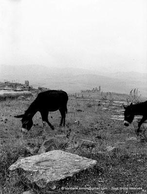 [NB027-1978-06] Khemissa (Thubursicu Numidarum) : les ruines du Ksar el Kebir (Fort byzantin)