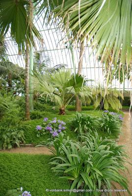 [NU900c-2012-0078] B - Bruxelles - Laeken : Serres royales - Jardin d'hiver