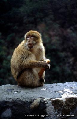 [014-1984-38] Gorges de Kherrata - Magot