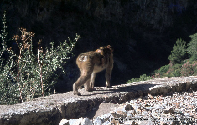 [071-1978-32] Gorges de Kherrata - Magot