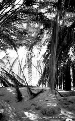 [NB023-1978-21] El Oued