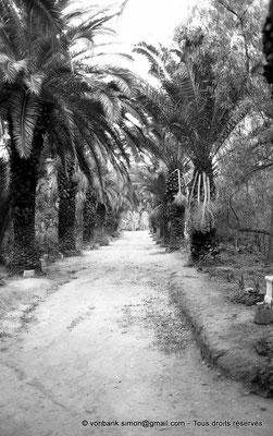[NB012-1981-06] Carthage (Carthago) : Allée de palmiers -Aire du Tophet