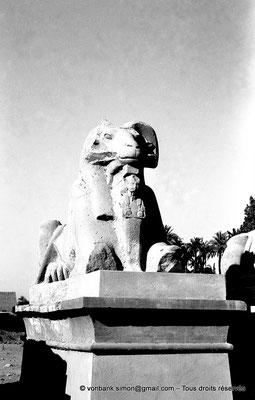 [NB077-1973-16] Karnak - Parvis du Temple : Sphinx à tête de bélier (criocéphale) tenant entre ses pattes une statue du pharaon