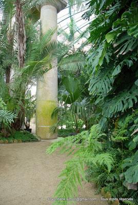 [NU900c-2012-0058] B - Bruxelles - Laeken : Serres royales - Jardin d'hiver