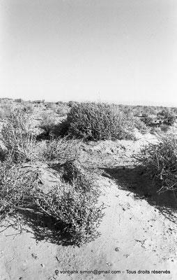 [NB052-1978-30] Massif de l'Aurès
