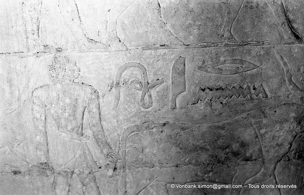 [NB080-1973-39] Saqqara - Mastaba de Watetkhethor : Hommes tirant un jeune bœuf à l'aide d'une courte corde (Chambre B3, mur Ouest)