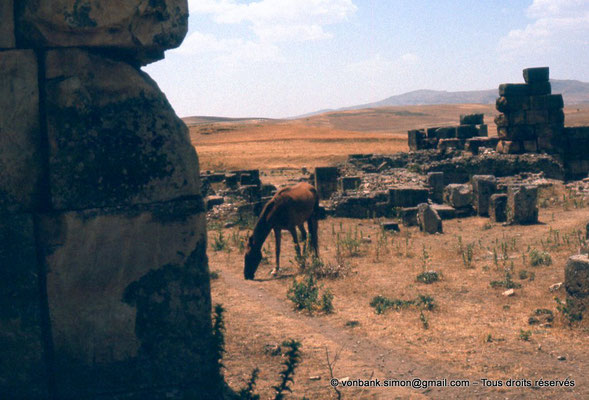 [022-1980-68] Khemissa (Thubursicu Numidarum) : les ruines du Ksar el Kebir (Fort byzantin)