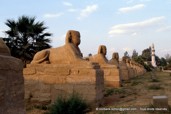 [068-1981-32] Louxor - Temple d'Amon-Rê : Voie processionnelle (dromos), rectiligne et dallée, bordée de sphinx, longue d'environ 2,5 km et large de 76 m (Nectanébo Ier (380-362 av. J.-C.)) reliant les temples de Louxor et de Karnak