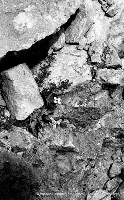 [NB053-1978-11] Massif de l'Aurès