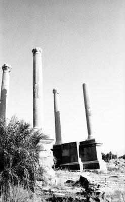 [NB038-1978-01] Timgad (Thamugadi) : Porte de Mascula (extrémité Est du Decumanus maximus)